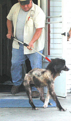 """<div class=""""source"""">Robin Smiley</div><div class=""""image-desc"""">Animal Control officer Paul Colson leads a severely underweight dog from the house at 203 W. Penn St. last Friday.</div><div class=""""buy-pic""""><a href=""""/photo_select/20382"""">Buy this photo</a></div>"""
