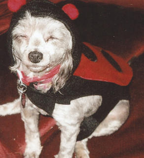 Check out our 2012 Halloween Pet Contest. Show your favorite some love by picking up a Democrat, circling your pick for cutest pet, and returning it to the Democrat office by noon on November 5th. We'll tally the votes and the winner will score a yummy treat basket. We'll print the winner in the November 8th Democrat. Good luck to our pet entries!