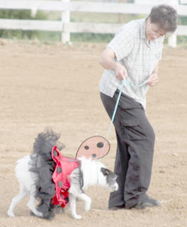 Gracie the dog won first place for best costume unopposed, dressed as a ladybug.