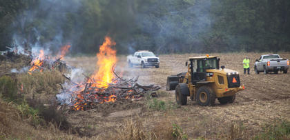 About half of the brush that the Harrison County State Road Department crew had gathered up along US 27, south of the Cynthiana city limits, was burned in the early morning hours of Monday, Sept. 19. State Road Department supervisor Kevin Florence oversaw the burn, which started about 7 a.m.