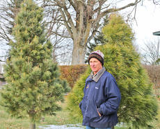 """<div class=""""source"""">Josh Shepherd</div><div class=""""image-desc"""">fine pines looking for homes, lights and ornaments — Robert Stoss stands before an example of a southeastern white pine and a southwestern white pine.</div><div class=""""buy-pic""""><a href=""""/photo_select/25761"""">Buy this photo</a></div>"""