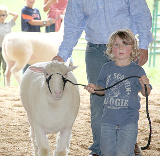 "Photos by Robin Smiley and Lee Kendall The 2018 Harrison County 4-H Fair officially got under way on Monday and will extend through this Saturday. Rain forced cancellation of the Saddles-n-Spurs sponsored Harrison County Fun Horse Show on Saturday in what was billed as a ""pre-fair event."" On Monday night, the baby show was held, along with the sheep show and several categories of the lawn tractor pull. Judging of 4-H exhibits for all categories of vegetables was also held on Monday.  Young children and young adults alike participated in the Sheep Show on Monday night at the Fair. Attention to detail and proper form in handling their animals paid off for the winners."