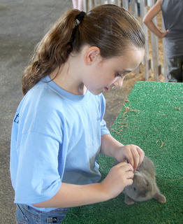 A young lady prepares her rabbit for judging on Thursday night.