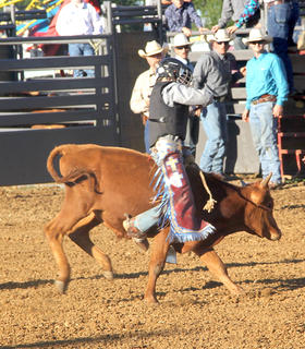 Local cowboy Cade Tobin, above, won the calf riding competition at the junior rodeo on Friday night at the Harrison County Fair.