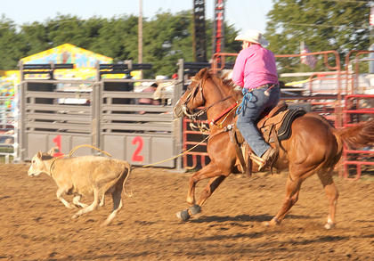 A cowboy prepares to dismount and tie up a calf he has just roped in the calf roping contest.